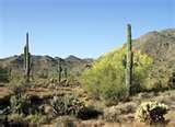 Phoenix Arizona Drug Rehabs Pictures